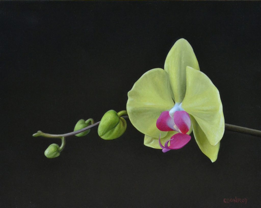"""Orchid 8"""" x 10"""""""